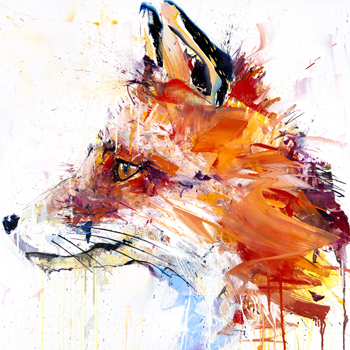 XL Fox I - Dave White