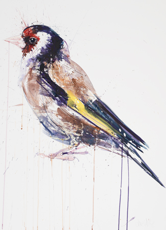 Goldfinch - Dave White