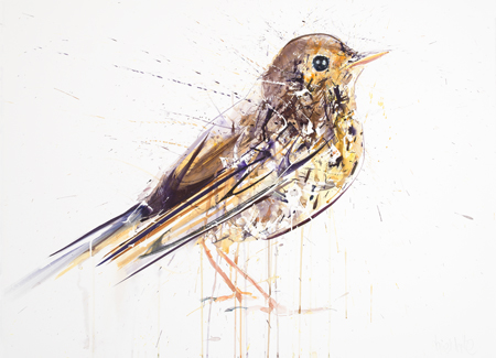 Song Thrush - Dave White