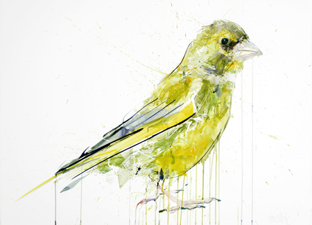 Greenfinch - Dave White