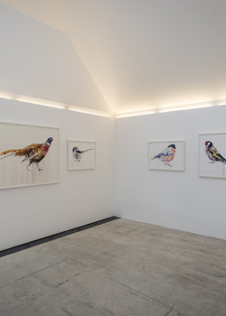 Dave White, Albion, Pheasant, Goldfinch