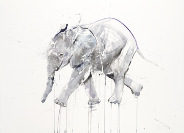 Young Elephant XII - Dave White