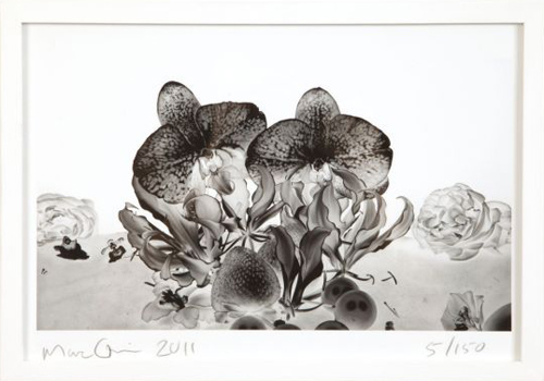 Under The Ocean - Print Edition - Marc Quinn