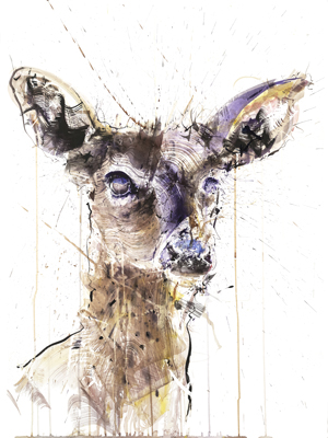 Doe II - Dave White