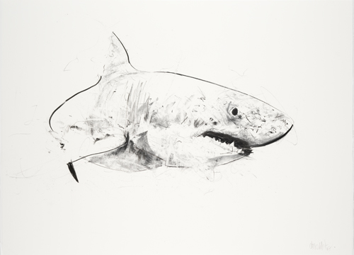 Great White III  - Dave White