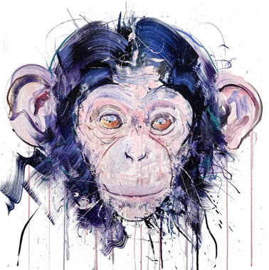 Dave White Baby Chimp Homepage