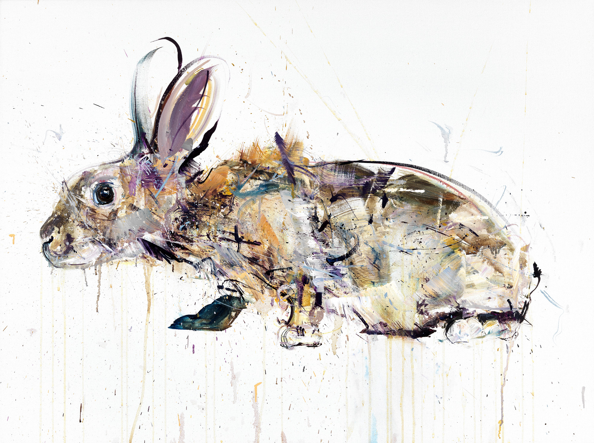Dave White, Rabbit II