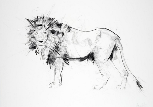 Lion II - Dave White